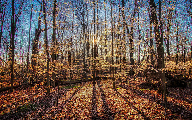 SunnyMorningTrees-2-Edit.jpg