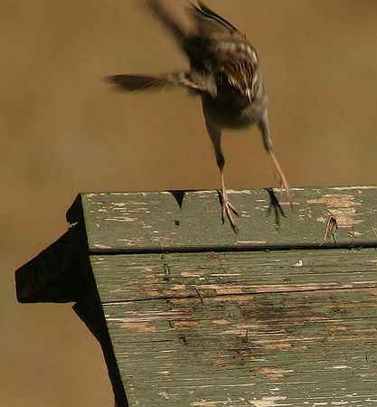 Coming in for a landing