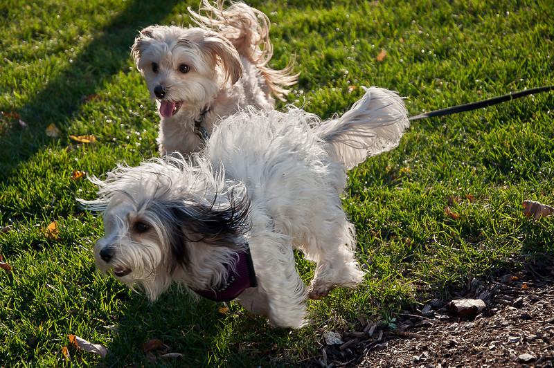 dog run12.jpg