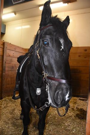 RPD mounted patrol horses. 11/12/2015