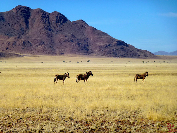 Road trip through South Namibia: spotting zebras