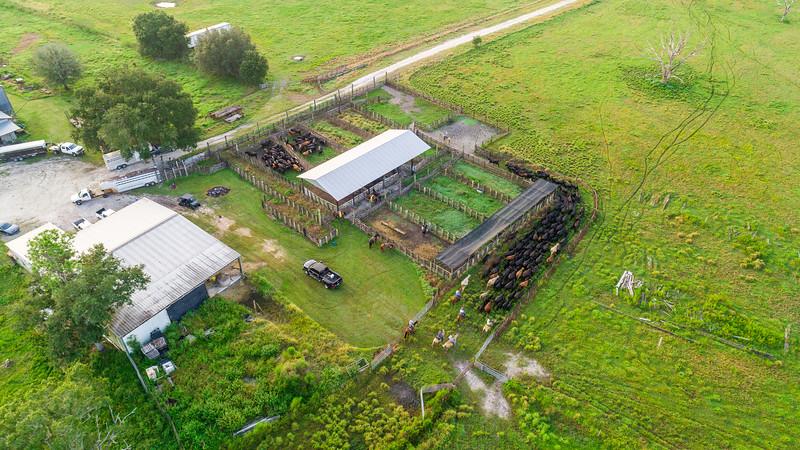 Barthle Cattle  (26 of 27).jpg