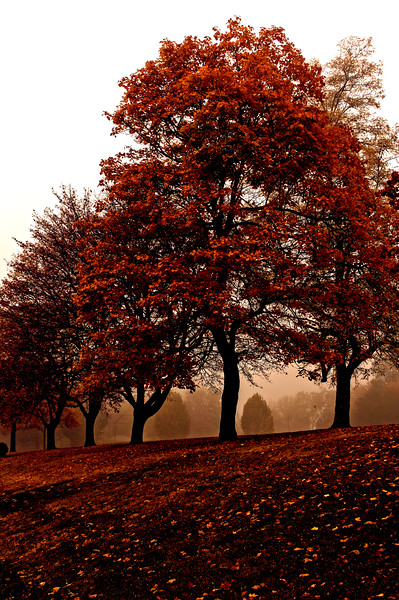 Foggy_Park_HDR5Vin.jpg