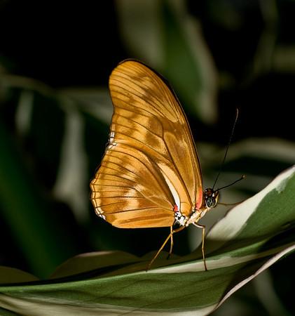 Butterfly Conservatory Niagara Falls, Canada