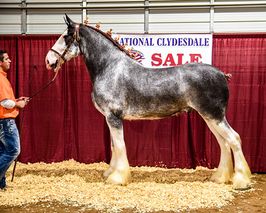 2019 National Clydesdale Sale