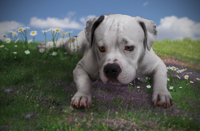 dog-purple-flowers.jpg
