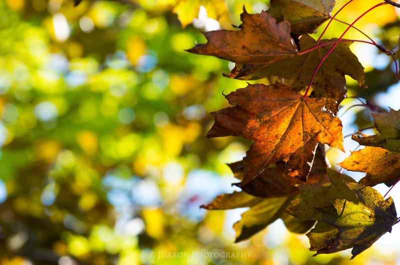 Leaf-Detail-5291.jpg