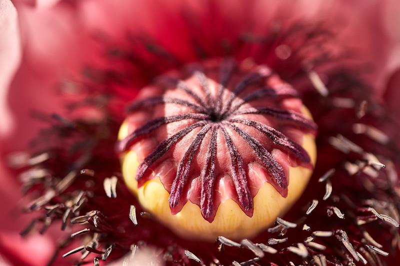 Flowers-5450.jpg