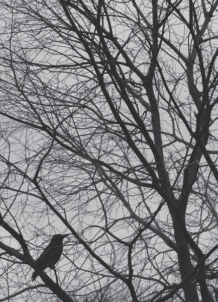 parisbird.jpg