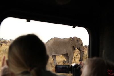 Spotting elephant in Etosha National Park, Namibia 1