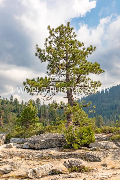 San Fran_Lake Tahoe Trip 2017-1510-85.jpg