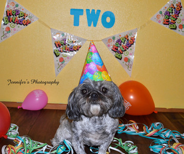 Doggie Birthdays