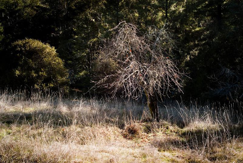 apple-trees-18.jpg