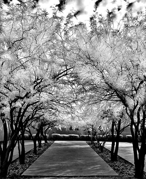 infrared-14-1-Edit-Edit-Edit-Edit-Edit.jpg