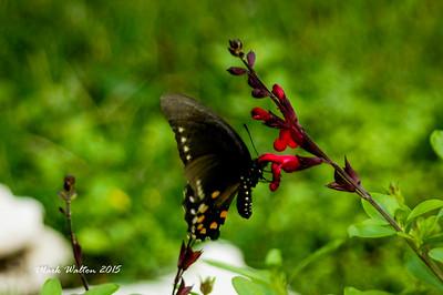 WILD FLOWERS & BUTTERFLIES