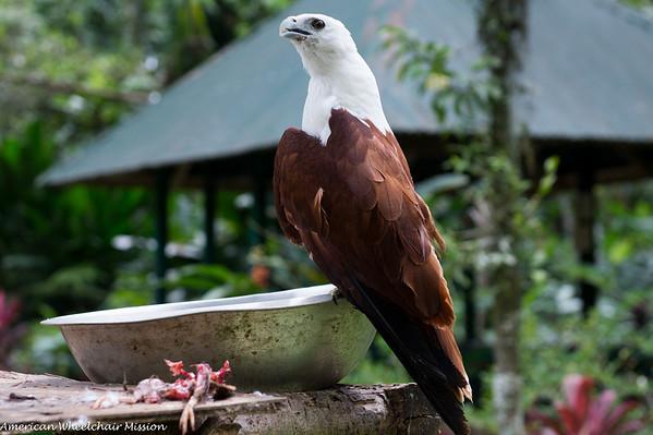 Tour of Philippine Eagle Center
