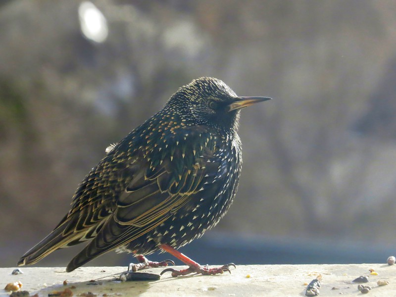 birds (187).jpg