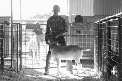 2014 Gerlach Livestock - Goats
