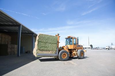 Oregon Hay