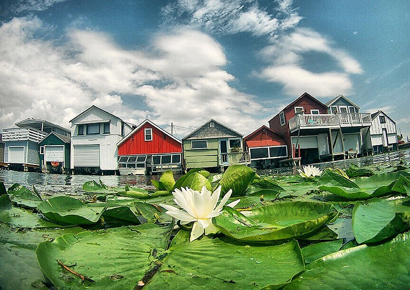 Jack Haley/Messenger Post MediaLily pad with flowers float near a row of boat houses on on the City Pier at Canandaigua lake Friday morning.