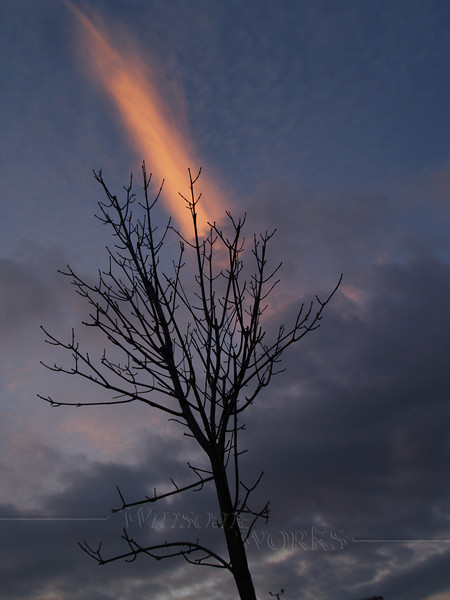 Bare tree with winter sunset streak - Quakertown, PA
