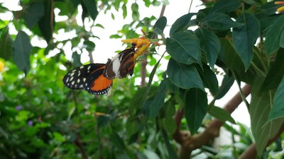 Niagara Falls and Butterfly Conservatory