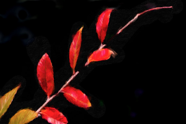 January 29 - Tree branch on a black wall-1.jpg