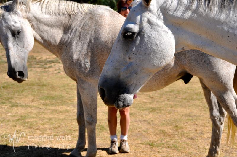 EB&Horses-049.jpg
