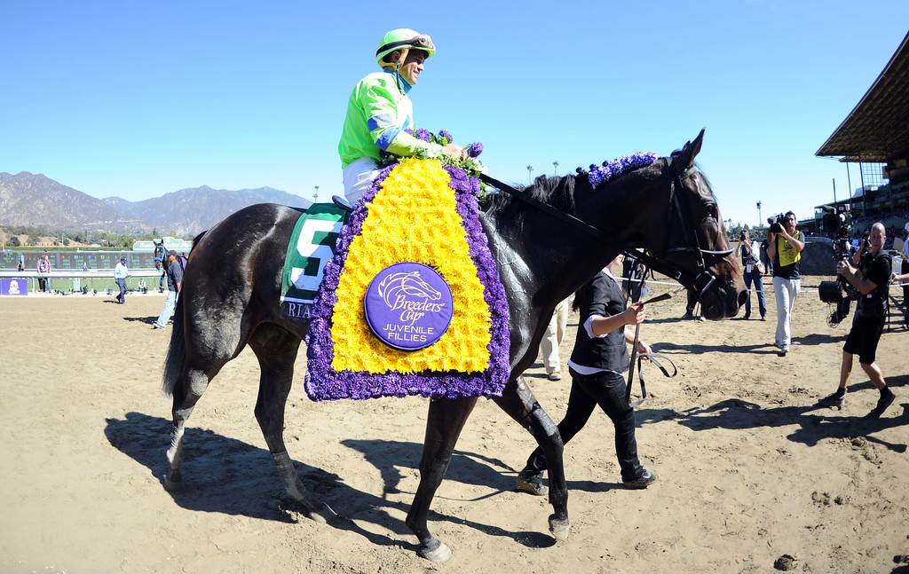 ". Jockey Javier Castellano atop ""Ria Antonia\"" celebrates after winning the fourth race during the Breeders\' Cup at Santa Anita Park in Arcadia, Calif., on Saturday, Nov. 2, 2013.    (Keith Birmingham Pasadena Star-News)"