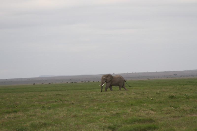 Kenya 2019 #2 1553.JPG