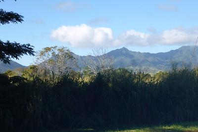 Plants Oahu