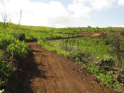 Santiago Oaks Regional Park: Mountain Goat Trail