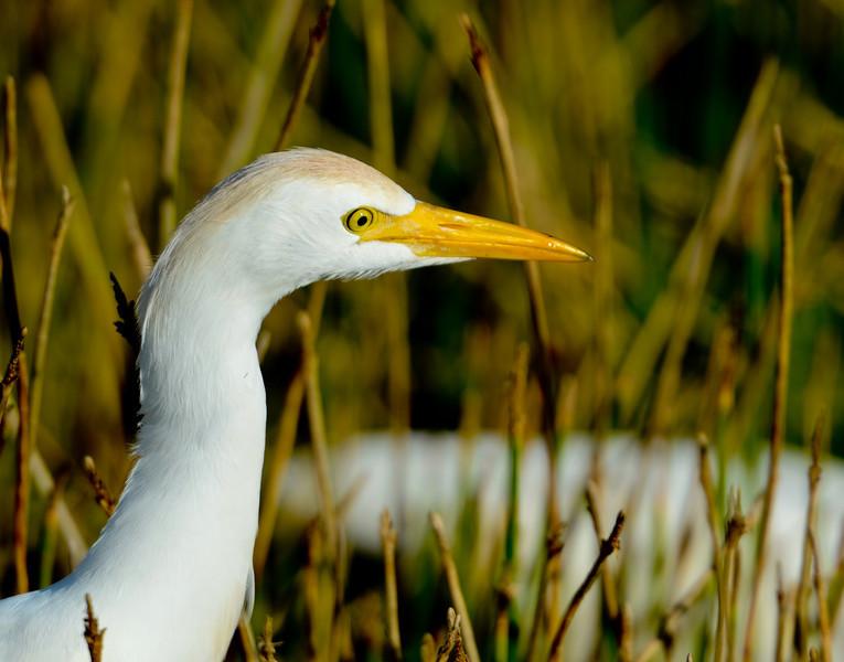 2011 Green Cay Nature Center-9056.jpg