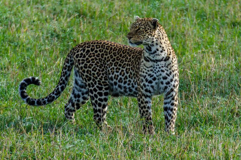 Leopards-0105.jpg