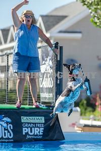 Splash Dogs Heritage Park 2014