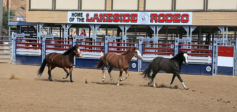 LSR 2015 and 3 Broncs_Susie.jpg