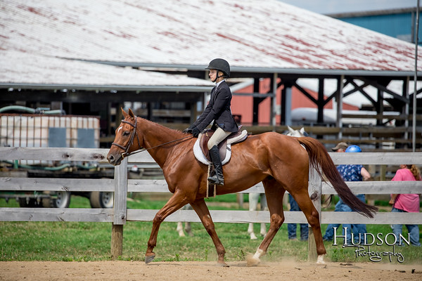 64 Classic HUS Horses Jr