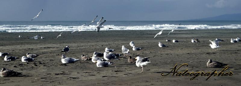 Seagul Beach Crop.jpg