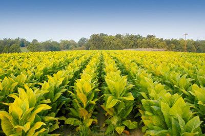 Kentucky Farming