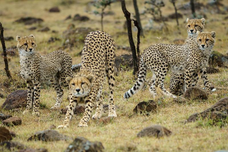 Kenya 2015-08931.jpg