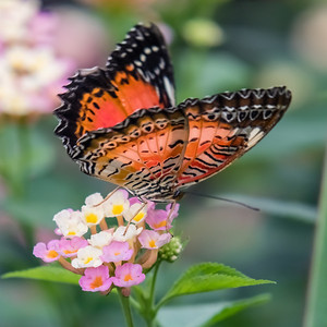 Luxembourg: The Butterfly Garden