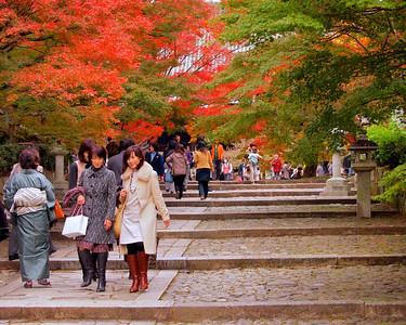 Kyoto momiji 2011