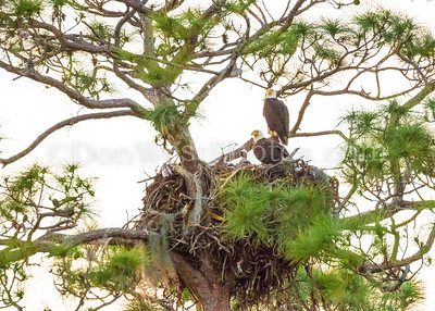 Eagles on Four Winds Ranch