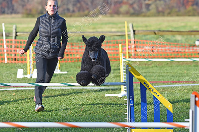 DACLI AKC Agility Trial, November 10-11, 2018