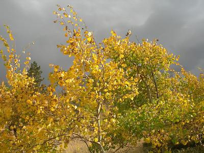 Vedauwoo Fall - Wyoming