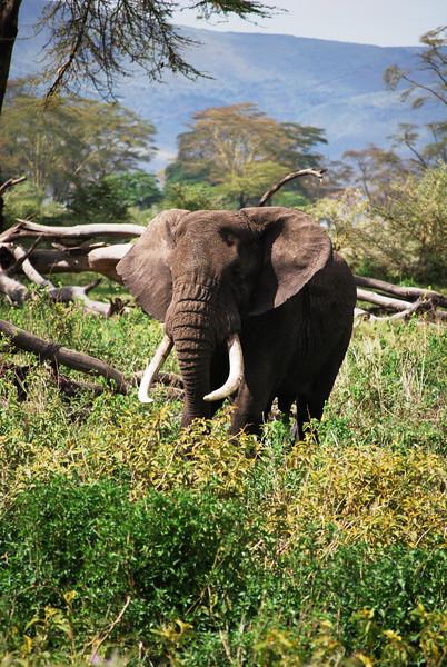 Ngorongoro (281).JPG