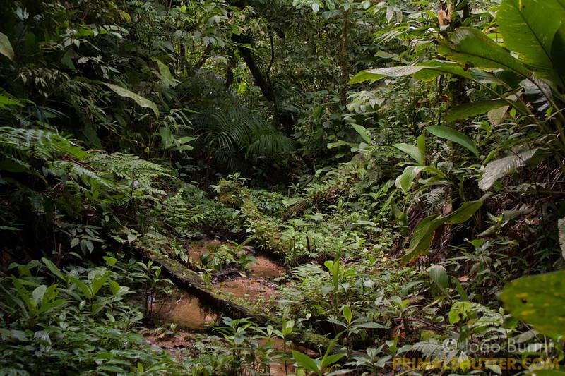 Forest stream with a overgrowth log blocking the way.  Riacho em mata atlântica com vegetação crescendo sobre troncos caídos.