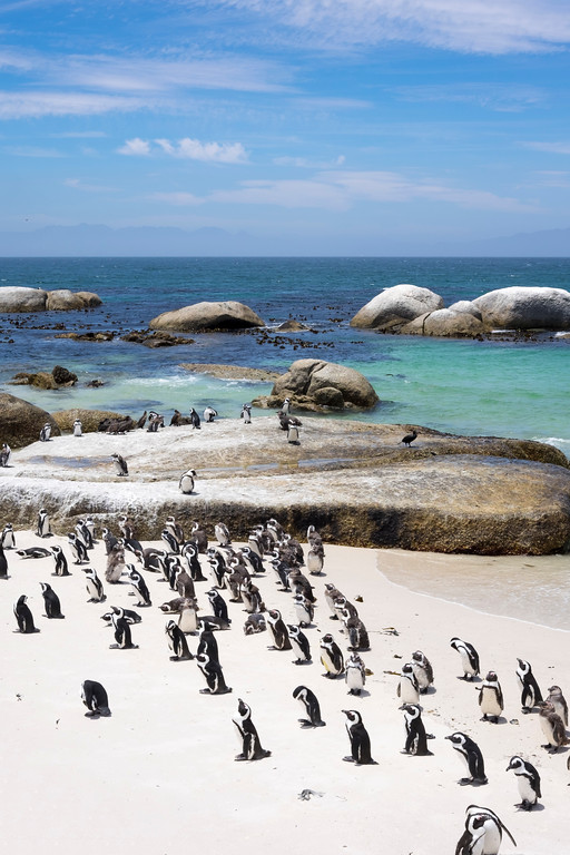 Penguin colony, Boulders Beach, Cape Town, South Africa