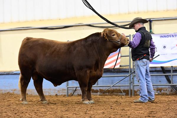 Ultra Bull Ring Shots