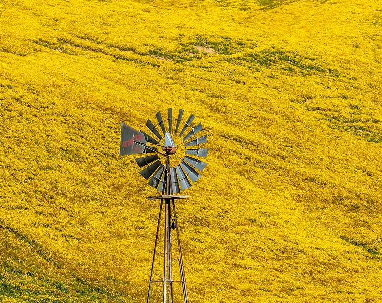 Carrizo Plain_Windmill-3.jpg